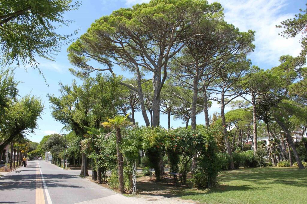 Parco delle Rose 2014 2